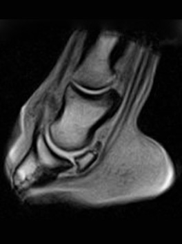 Patterson Veterinary MRI is a collaborative effort between C. B. Miller and Associates, New England Equine, Pine Bush Equine, and Dunbarton Equine.