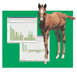 Our ration evaluation program includes an assessment of your  horse's weight and body condition, analysis of feedstuffs where applicable, and  the integration of any pertinent medical history our doctors provide.