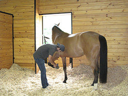 Mares are groomed and hand walked daily by our professional staff.