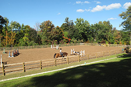 Our mission at Miller & Associates is to make your mare's stay in quarantine a healthy, happy and calm experience.